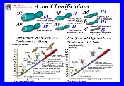 Axon Classifications Wall Chart